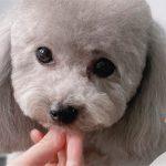 Pocket Pets Grooming