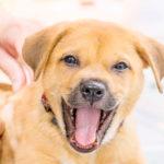 Barkway Pet Health