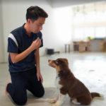 Hopefordogs Canine Training