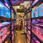 K & K Aquarium & Birds Centre