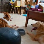 PUPS Dog Obedience School