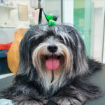 Dog Haven Grooming Salon